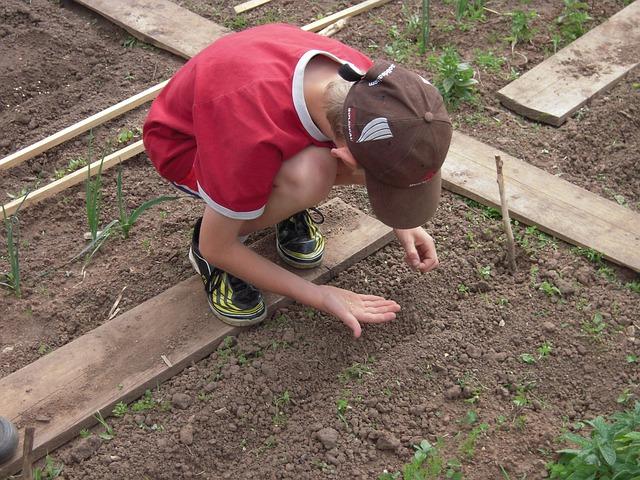 L' hort escolar com a recus pedagògic