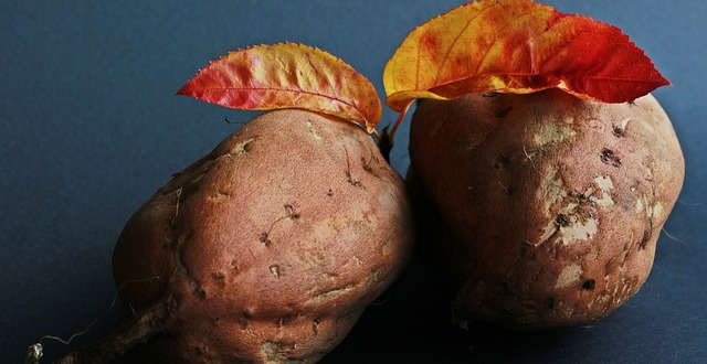 receptes-amb-moniatos